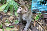 河口森林公安发布倡议书:依法保护野生动物 拒食野生动物