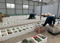 """青州""""战疫""""号物资专列再启程 30吨新鲜蔬菜驰援武汉"""