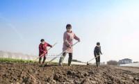 青岛平度:线上线下双保障 农耕服务送到家