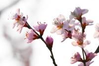 逆光中的花朵璀璨绽放 这是我们春天的约定