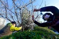 组图|济南处处五彩斑斓春意浓 市民手举相机拍下人间春光彩