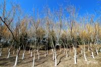 """【地评线】齐鲁网评:党员干部须在心中植好""""三棵树"""""""
