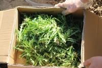 """285株""""大烟苗""""!滨州开发区警方成功破获一起非法种植毒品原植物案"""
