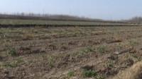 22秒|滨州无棣推广中草药种植 经济效益和生态效益双丰收
