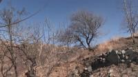 69秒丨滨州邹平做好森林防火 守护绿水青山