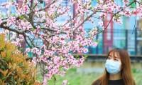 拥抱春天 云端赏景|春风万里送香来 感受来自千年宋城的春意
