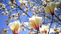 高校云赏花|万紫千红总是春!山东第一医科大学已是满园芬芳