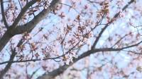 高校云赏花丨春天最美的样子就在泰山学院