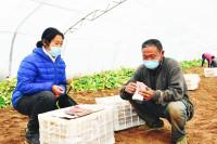 """6万斤土豆一上午卖完!胶州""""地头市场""""保增收"""