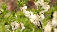 我们的美丽庭院丨花开四季 济宁曲阜这个农家小院种了上百种花
