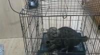 刚刚,山东理工大学虐猫学生范某庆被学校劝退