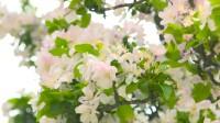 高校云赏花丨开往春天的列车 聊城大学是必去的一站