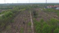 26秒丨滨州无棣种棉大户改种艺术树 十年种树现能创造千万资产