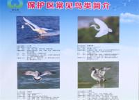 """威海荣成开展""""爱鸟周""""宣传活动 增强市民爱鸟护鸟意识"""