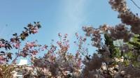 高校云赏花丨拾一片中国石油大学的春色寄给你