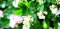 这就是山东丨绿树繁花相映成趣,雨中桓台风景别样美