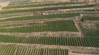 36秒丨日照岚山区:推进高标准农田和现代农业产业园建设 助力乡村振兴战略