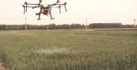 23秒|日照东港区6000余亩小麦统防统治全面启动