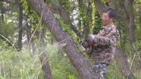 25秒丨日照岚山:全面防控松材线虫病 确保森林资源安全