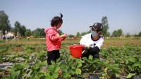57秒丨让草莓融入旅游富民 东营市小草莓种出乡村振兴新希望