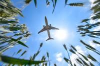 丰收在望!镜头下麦穗与飞机同框 让人充满无限想象