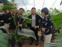 课堂教学与现场示范相结合!曲阜开展高效农业发展项目设施蔬菜技术培训