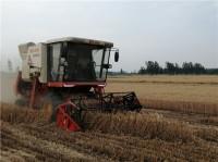 丰收了!济宁嘉祥县68万亩小麦开镰收割