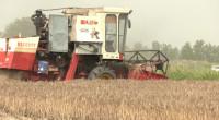 """23秒 日照岚山区15万余台机械参与""""三夏""""生产 已收割6.8万亩小麦"""