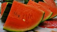 """滨州:更新换代的西瓜品种 """"皮薄肉甜""""口感甜爽"""