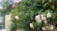 这就是山东丨花团锦簇、草青水澈!泰安岱岳区大桥村村民幸福感满满