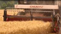 43秒丨滨州阳信发展富硒小麦 助农增产增收
