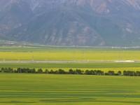 山东援青十年 | 青海海北州门源县油菜花开了!闪电新闻记者带您看万亩花海