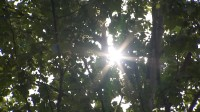 海丽气象吧 高温橙色预警!山东这8市部分地区18日最高气温将超37°C