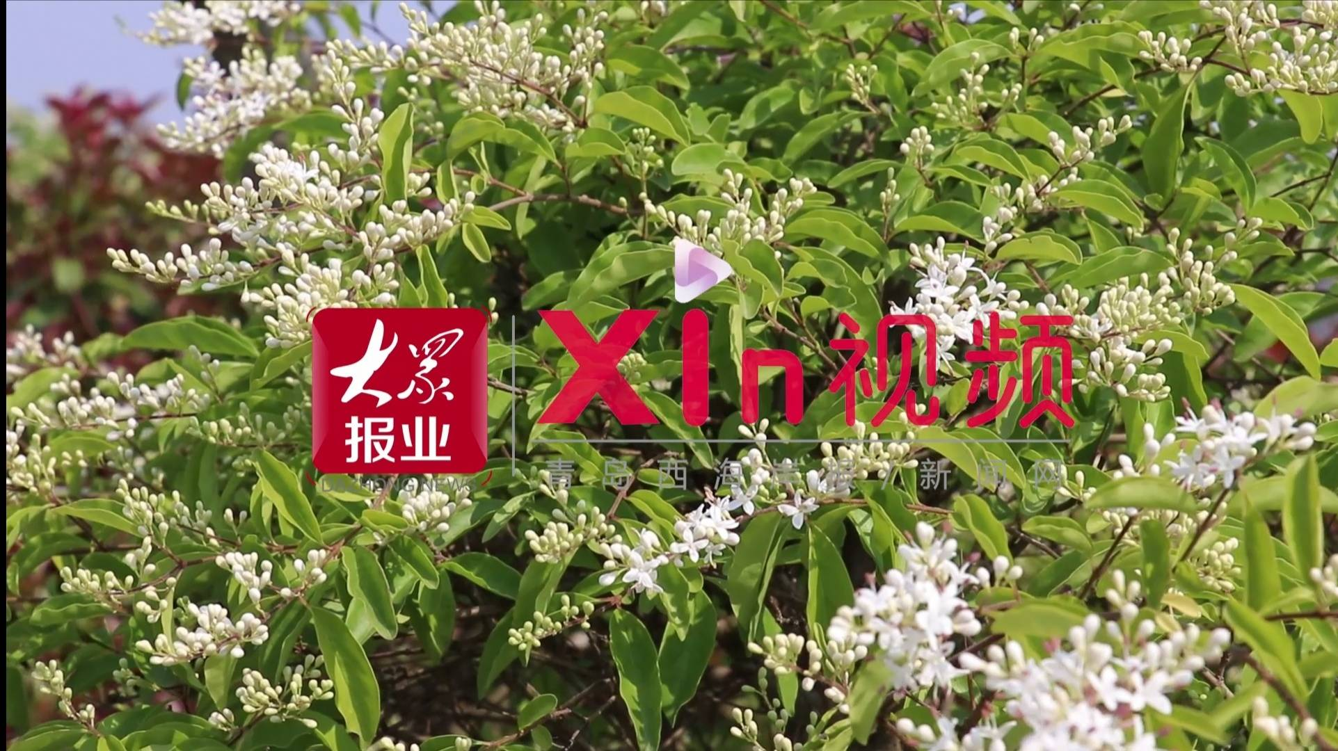 Xin视频丨美丽乡村入画来